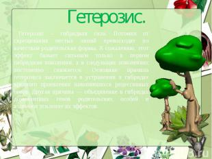 Гетерозис.Гетерозис – гибридная сила. Потомки от скрещивания чистых линий превос