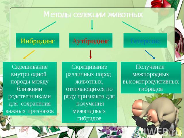 Методы селекции животных