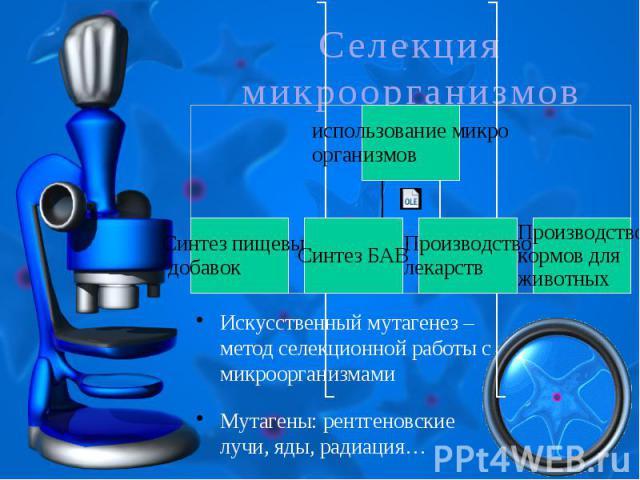 Селекция микроорганизмовИскусственный мутагенез – метод селекционной работы с микроорганизмамиМутагены: рентгеновские лучи, яды, радиация…