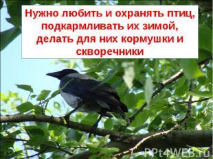 Нужно любить и охранять птиц, подкармливать их зимой, делать для них кормушки и