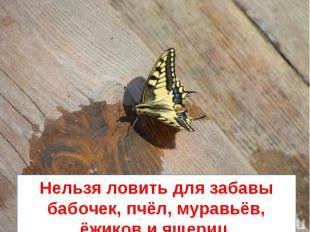 Нельзя ловить для забавы бабочек, пчёл, муравьёв, ёжиков и ящериц