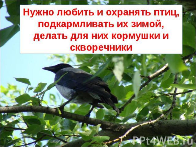 Нужно любить и охранять птиц, подкармливать их зимой, делать для них кормушки и скворечники