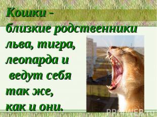 Кошки - близкие родственники льва, тигра, леопарда и ведут себя так же, как и он