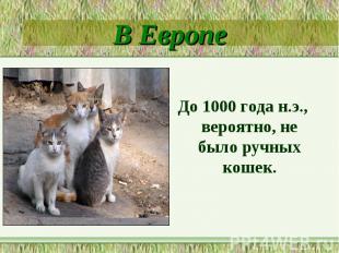 В ЕвропеДо 1000 года н.э., вероятно, не было ручных кошек.