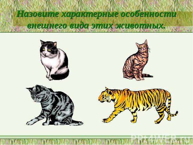 Назовите характерные особенности внешнего вида этих животных.