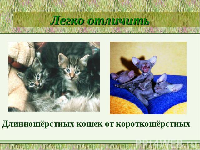 Легко отличитьДлинношёрстных кошек от короткошёрстных