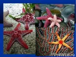 Одним из интересных фактов о морской звезде является то, что большинство из них