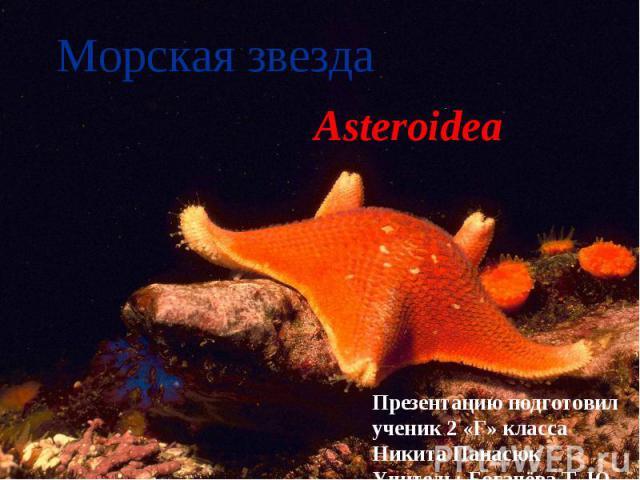 Морская звезда Asteroidea Презентацию подготовил ученик 2 «Г» класса Никита Панасюк Учитель: Богачёва Т. Ю.