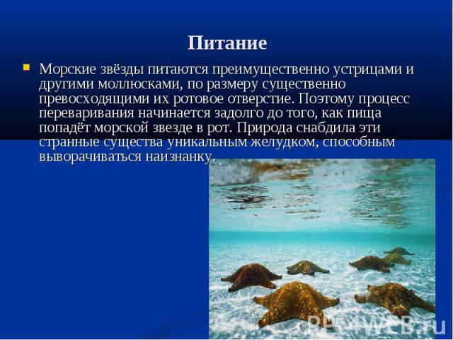 Питание Морские звёзды питаются преимущественно устрицами и другими моллюсками, по размеру существенно превосходящими их ротовое отверстие. Поэтому процесс переваривания начинается задолго до того, как пища попадёт морской звезде в рот. Природа снаб…