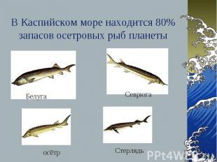 В Каспийском море находится 80% запасов осетровых рыб планеты