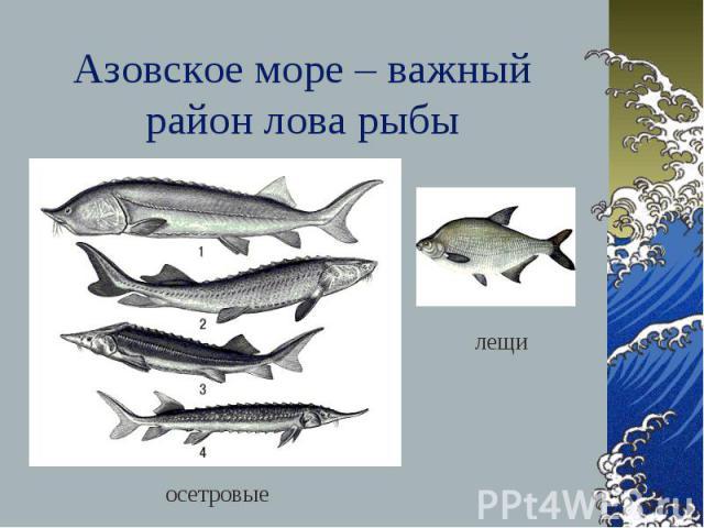 Азовское море – важный район лова рыбы