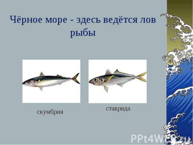 Чёрное море - здесь ведётся лов рыбы