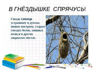 В ГНЁЗДЫШКЕ СПРЯЧУСЬ! Гнездо синица устраивает в дуплах, нишах построек, старых
