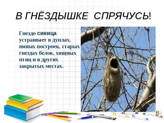 В ГНЁЗДЫШКЕ СПРЯЧУСЬ! Гнездо синица устраивает в дуплах, нишах построек, старых гнездах белок, хищных птиц и в других закрытых местах.