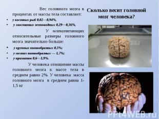 Вес головного мозга в процентах от массы тела составляет: у костных рыб 0,02—0,9