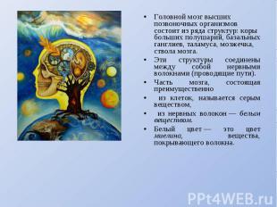 Головной мозг высших позвоночных организмов состоит из ряда структур: коры больш