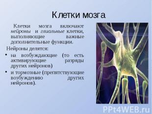 Клетки мозга Клетки мозга включают нейроны и глиальные клетки, выполняющие важны