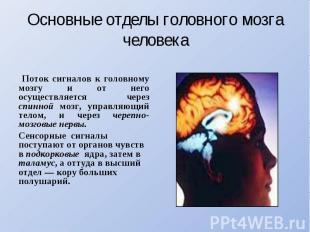 Основные отделы головного мозга человека Поток сигналов к головному мозгу и от н