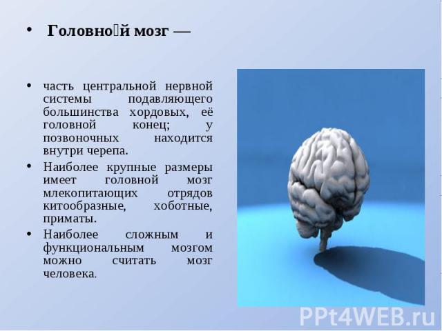 Головной мозг — часть центральной нервной системы подавляющего большинства хордовых, её головной конец; у позвоночных находится внутри черепа. Наиболее крупные размеры имеет головной мозг млекопитающих отрядов китообразные, хоботные, приматы. Наибол…
