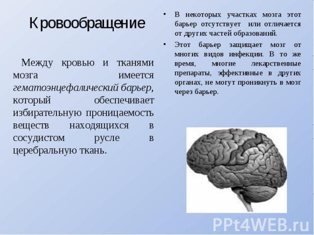 Кровообращение Между кровью и тканями мозга имеется гематоэнцефалический барьер, который обеспечивает избирательную проницаемость веществ находящихся в сосудистом русле в церебральную ткань. В некоторых участках мозга этот барьер отсутствует или отл…
