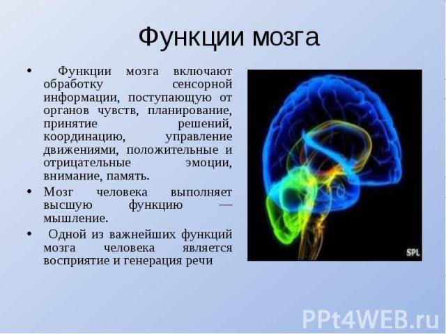 Функции мозга Функции мозга включают обработку сенсорной информации, поступающую от органов чувств, планирование, принятие решений, координацию, управление движениями, положительные и отрицательные эмоции, внимание, память. Мозг человека выполняет в…