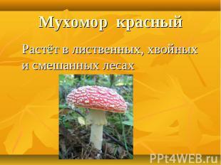 Мухомор красныйРастёт в лиственных, хвойных и смешанных лесах