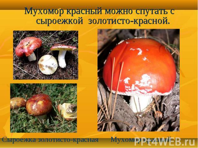 Мухомор красный можно спутать с сыроежкой золотисто-красной.Сыроежка золотисто-краснаяМухомор красный