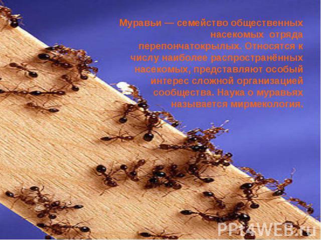 Муравьи — семейство общественных насекомых отряда перепончатокрылых. Относятся к числу наиболее распространённых насекомых, представляют особый интерес сложной организацией сообщества. Наука о муравьях называется мирмекология.