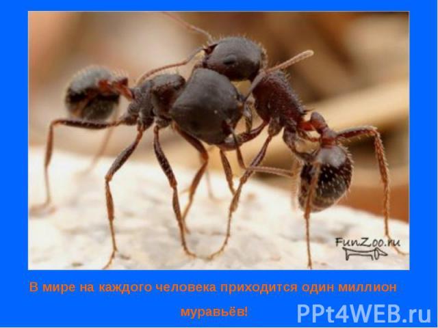 В мире на каждого человека приходится один миллион муравьёв!