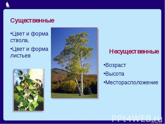 СущественныеЦвет и форма ствола,Цвет и форма листьевНесущественныеВозрастВысотаМесторасположение