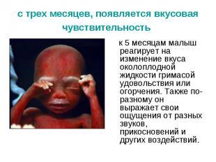 с трех месяцев, появляется вкусовая чувствительность к 5 месяцам малыш реагирует
