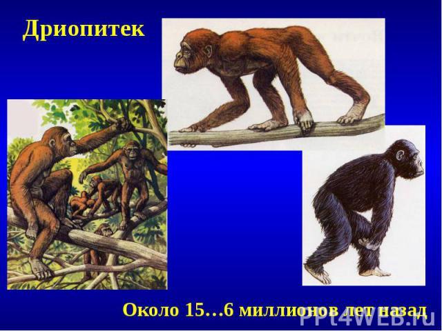 ДриопитекОколо 15…6 миллионов лет назад