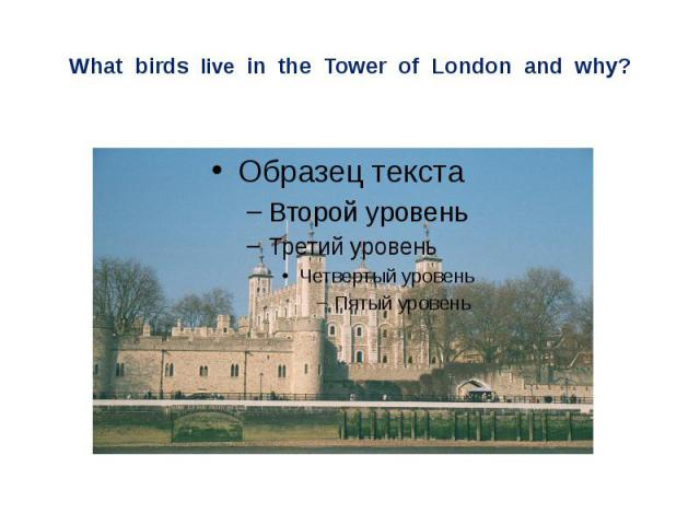 What birds live in the Tower of London and why?
