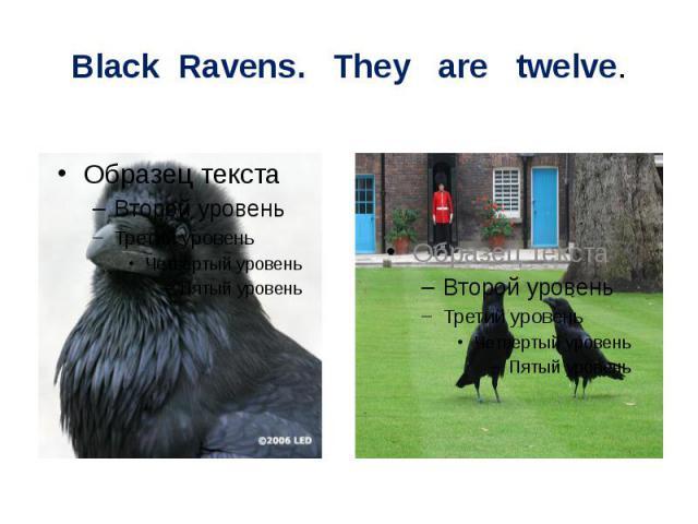 Black Ravens. They are twelve.