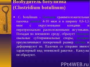 C. botulinum - большая граммположительная палочка длиной 4-10 мкм и