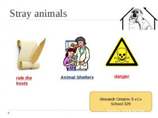 Stray animals