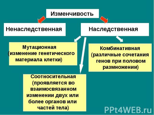 Изменчивость Ненаследственная Наследственная Мутационная(изменение генетического материала клетки) Комбинативная(различные сочетания генов при половом размножении) Соотносительная(проявляется во взаимосвязанном изменении двух или более органов или ч…