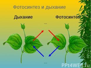 Фотосинтез и дыхание Дыхание Фотосинтез