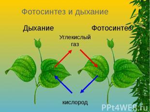 Фотосинтез и дыхание Дыхание Углекислый газ Фотосинтез кислород