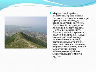 Маркхотский хребет – ежевичный, хребет ажины-ежевики.На обоих склонах горы произ