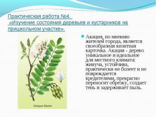 Практическая работа №4. «Изучение состояния деревьев и кустарников на пришкольно