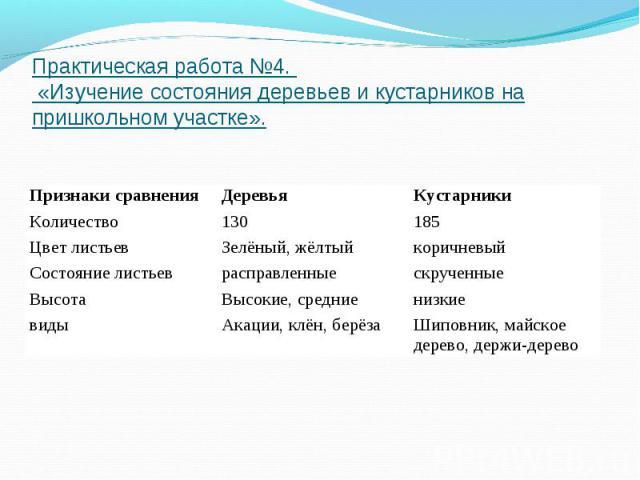 Практическая работа №4. «Изучение состояния деревьев и кустарников на пришкольном участке».