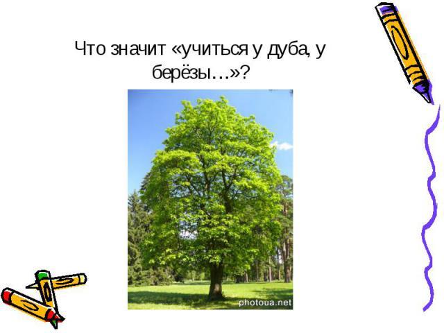 Что значит «учиться у дуба, у берёзы…»?