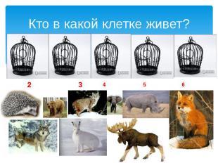 Кто в какой клетке живет? 2 3