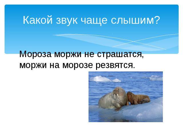 Какой звук чаще слышим?Мороза моржи не страшатся, моржи на морозе резвятся.