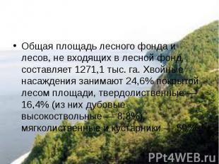 Общая площадь лесного фонда и лесов, не входящих в лесной фонд, составляет 1271,
