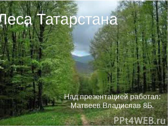 Леса ТатарстанаНад презентацией работал: Матвеев Владислав 8Б.