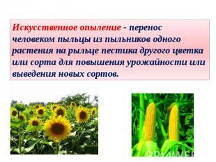 Искусственное опыление - перенос человеком пыльцы из пыльников одного растения н