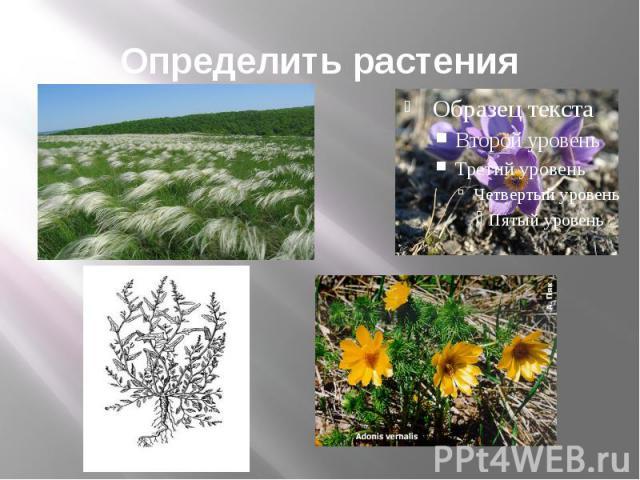 Определить растения