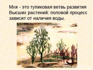 Мхи - это тупиковая ветвь развития Высших растений: половой процесс зависит от н